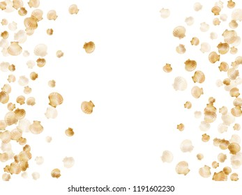 Gold seashells vector, golden pearl bivalved mollusks. Underwater scallop, bivalve pearl shell, marine mollusk isolated on white wild life nature background. Trendy gold sea shell illustration.