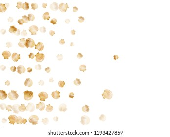 Gold seashells vector, golden pearl bivalved mollusks. Sea scallop, bivalve pearl shell, marine mollusk isolated on white wild life nature background. Chic gold sea shell vector.