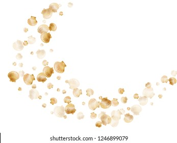 Gold seashells vector, golden pearl bivalved mollusks. Exotic scallop, bivalve pearl shell, marine mollusk isolated on white wild life nature background. Chic gold sea shell design.