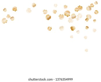 Gold seashells vector, golden pearl bivalved mollusks. Macro scallop, bivalve pearl shell, marine mollusk isolated on white wild life nature background. Cool gold sea shell vector.