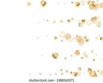 Gold seashells vector, golden pearl bivalved mollusks. Sea scallop, bivalve pearl shell, marine mollusk isolated on white wild life nature background. Rich gold sea shell graphics.