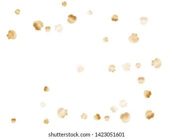 Gold seashells vector, golden pearl bivalved mollusks. Underwater scallop, bivalve pearl shell, marine mollusk isolated on white wild life nature background. Rich gold sea shell illustration.
