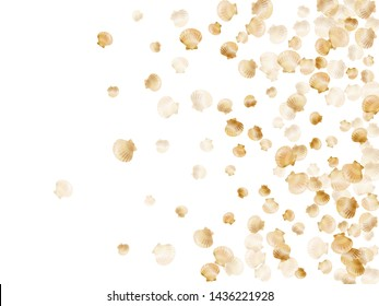 Gold seashells vector, golden pearl bivalved mollusks. Exotic scallop, bivalve pearl shell, marine mollusk isolated on white wild life nature background. Stylish gold sea shell illustration.