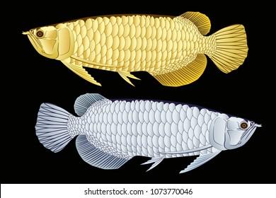 Gold and silver Arowana dragon fish graphic vector