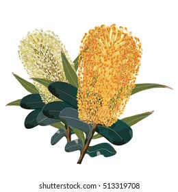 Gold and yellow banksia flowers