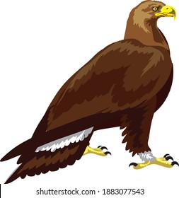 Golden Eagle, American great wild bird , isolated on white = Vector