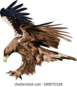 Golden eagle.  Flying bird vector