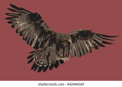 Golden Eagle - Vector Art