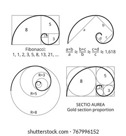 Golden fibonacci ratio spirals. Gold section proportion vector visualization. Spiral proportion golden section illustration