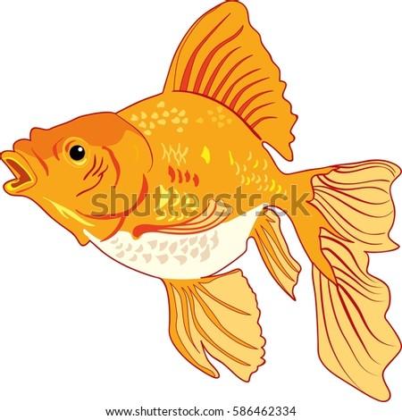 Golden Fish Vector Illustration