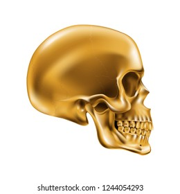Golden Human Skull on White Background for Design