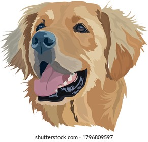 Golden Labrador Retriever Head Vector Illustration.Portrait of dog