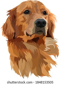 Golden Labrador Retriever Head vector Illustration
