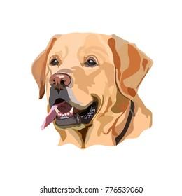 Golden Labrador Retriever vector