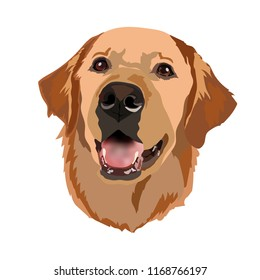 Golden Labrador Retriever vector Head