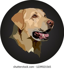 Golden Labrador Retriever.Vector illustration.