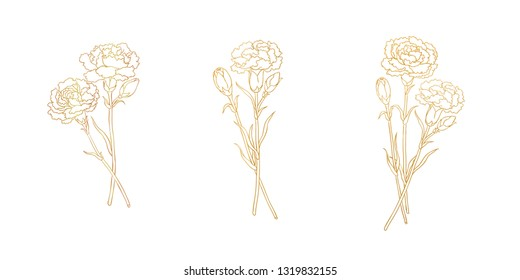 Golden lines of carnation, blank background