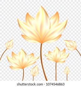 Golden Realistic Lotus flowers on isolate background.