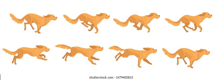 Golden retriever breed dog running animation.Stop motion sequence for a 2D character.