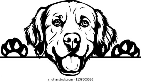 Golden Retriever dog breed face head isolated pet animal domestic pet canine puppy purebred pedigree hound portrait peeking paws smiling smile happy art artwork illustration design