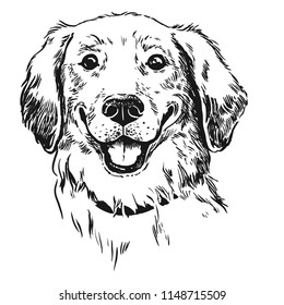 Golden retriever dog, smiling with tongue out. Pen and ink vintage style hand drawn handsome cute dog face portrait.