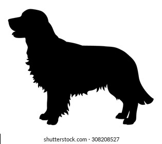 Golden Retriever purebred dog standing in side view - vector silhouette isolated