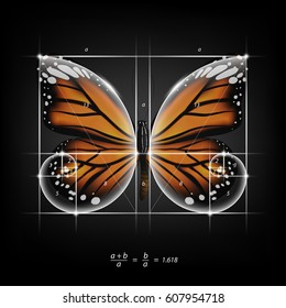 Golden section (ratio, divine proportion) and golden spiral on monarch butterfly vector transparent