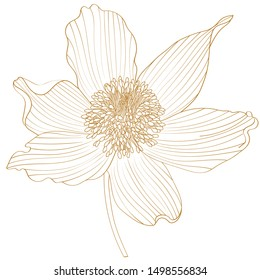 Golden Spring-flowering pasque Pulsatilla flowers.Hand drawn sketch flowers, floral pattern Vector illustration.A picture is showing a flower of Anemone Pulsatilla also known as Pasque Flower.