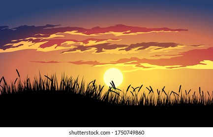 Golden sunset with grass silhouette and clouds