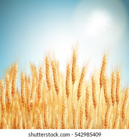 Golden wheat field and sunny day. EPS 10 vector file included