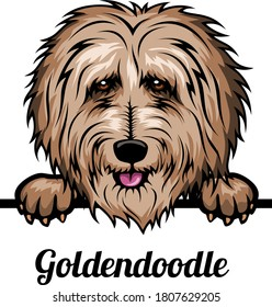 Goldendoodle - Color Head Dog - vector stock illustration isolated on white