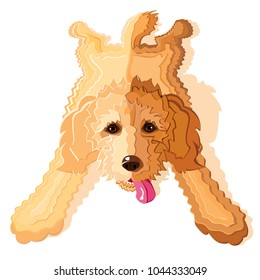 goldendoodle or labradoodle dog laying down with back legs splayed out in sloop position, vector illustration
