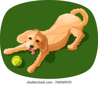 goldendoodle or labradoodle puppy dog ready to play fetch with a tennis ball, vector illustration