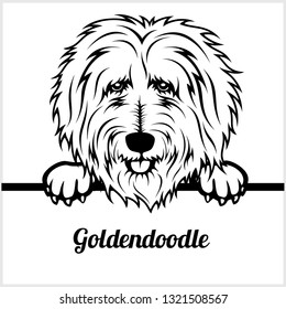 Goldendoodle - Peeking Dogs - breed face head isolated on white - vector stock