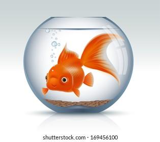 Goldenfish in aquarium