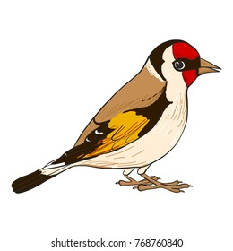 goldfinch, vector bird, hand drawn songbird, isolated vector elements