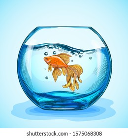 Goldfish in a blue fishbowl, hand drawn sketch