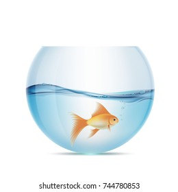 Goldfish floats in a transparent aquarium. Isolated on white background. Stock vector illustration.