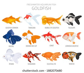 Goldfish. Freshwater aquarium fish icon set flat style isolated on white.  Vector illustration