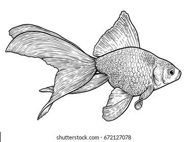 Goldfish illustration, drawing, engraving, ink, line art, vector