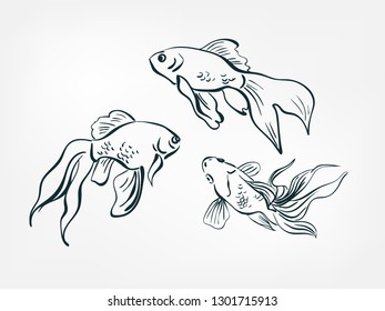 goldfish set collection japanese chinese oriental vector ink style design elements illustration