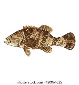 Goliath Grouper Gamefish ocean vector illustration
