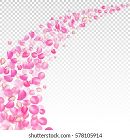 Gone with the Wind rose petals. Realistic vector pink petals on transparent background.