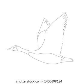 goose canadian, .vector illustration,lining draw