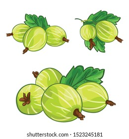 Gooseberry with leaves isolated on white background. Berry branch gooseberries. Hand drawn vector illustration.