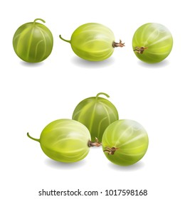 Gooseberry realisitc 3d illustration. Gooseberry bush icon