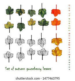 Gooseberry, set of hand drawn vector isolated colorful autumn leaves  of gooseberry realistic on a white background