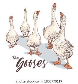 Gooses group. T-shirt composition, hand drawn style print. Vector illustration.