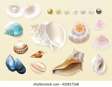 Gorgeous colorful collection of seashells and pearls in top view perspective isolated on light sandy beach colored background, summer theme vector illustrations