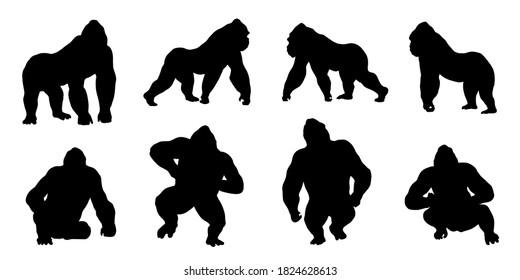 gorilla silhouettes on white background